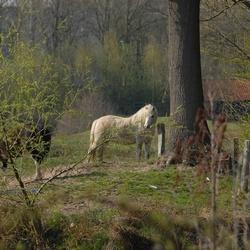 paard in de natuur