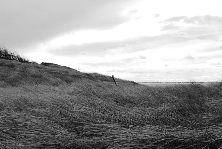 Vlissingen - Op plaats Rust... - Een eenzame stok midden in het duinlandschap. Genomen in Vlissingen, Zeeland.