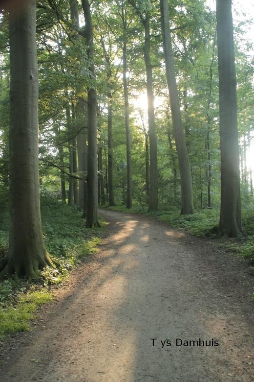 natuur Tys Damhuis  (20) - gemaakt door Tys Damhuis