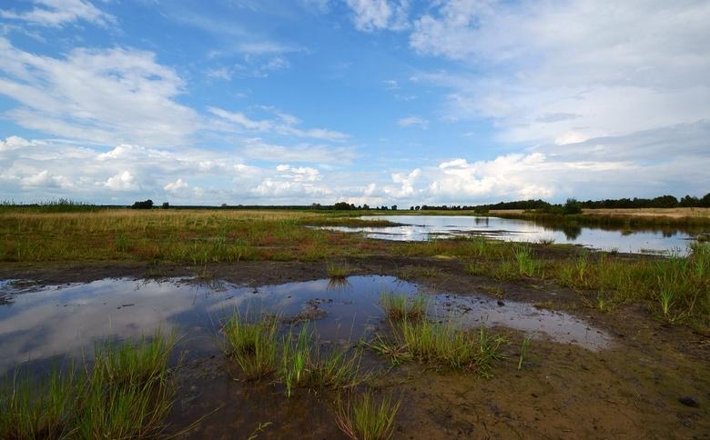 Bargerveen......... - .......Er zijn maar weinig hoogveengebieden in Nederland.<br /> Het hoogveenreservaat Bargerveen is een van de belangrijkste en
