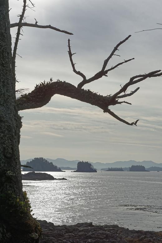 Kustlijn - Aanblik van de kustlijn bij Vancouver Island in de ochtendzon.