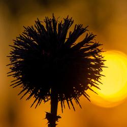 Tegenlicht bij ondergaande zon