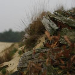 Zandverstuiving Harderwijk