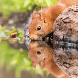Spiegeltje.....met eekhoorn