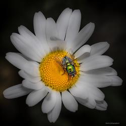 wilde bloem met gast