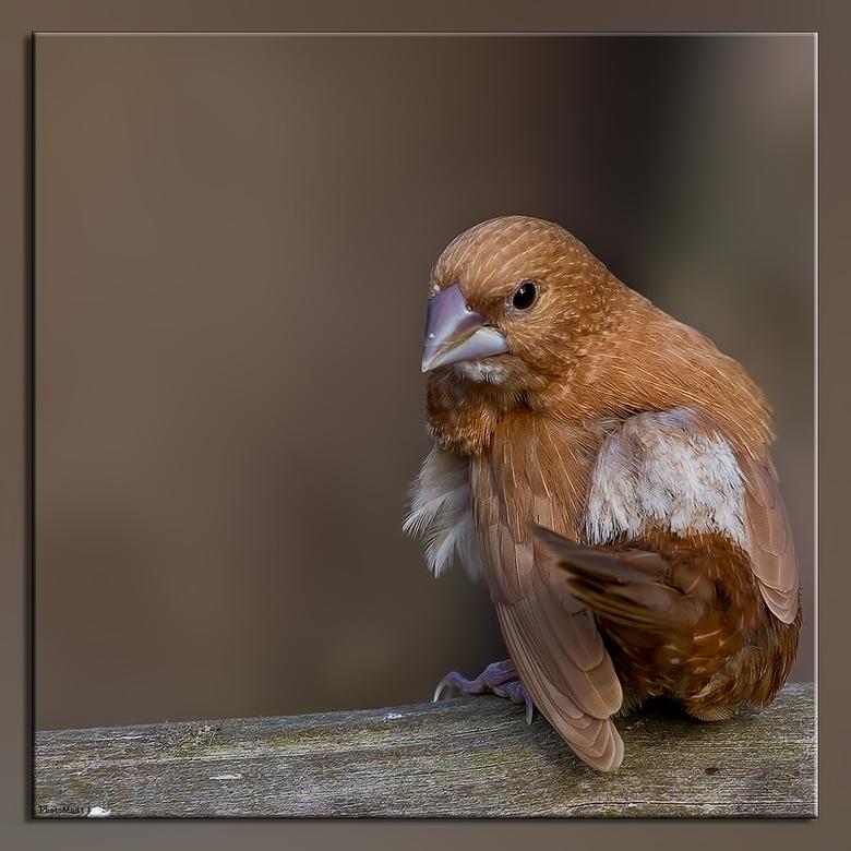 Eureka! - a.s vrijdag gaan we naar Texel, naar vogelparadijs Eureka. Er kunnen nog liefhebbers mee! Dit is een van de vele vogeltjes die je kunt fotog