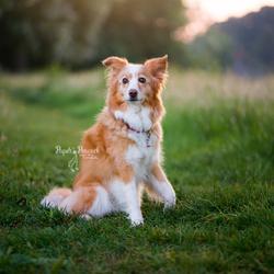 Hond Beertje
