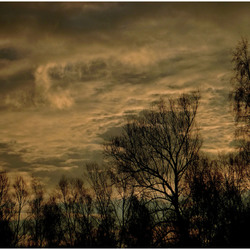 Sprekende lucht en pratende bomen ...