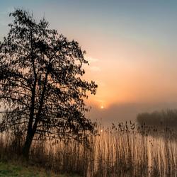 Misty morning....