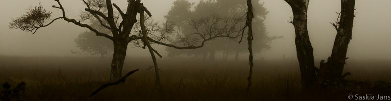 Edelherten in de Mist - Gisterochtend om 5 uur opgestaan. Ik had om 6 uur afgesproken, ergens in Assen, om vanaf daar samen door te rijden naar de Vel