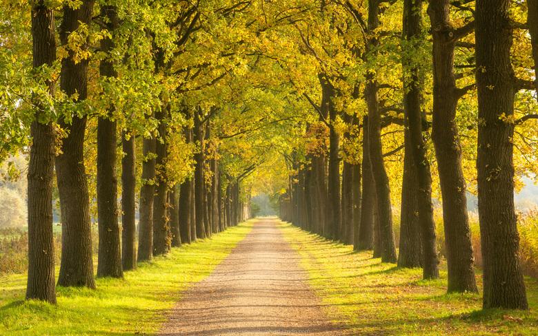 Autumn Light - Dit laantje heb ik al vele malen op de foto gezet. Door gebruik te maken van een zoomlens ontstaat een rustig en symmetrisch beeld wat