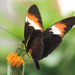 Vlinder, vlindertuin, Kwadendamme