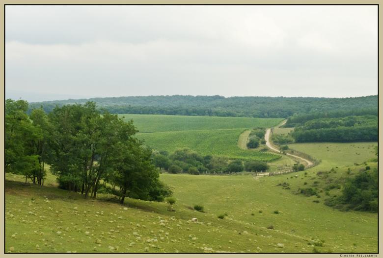 Landschap bij Dunaszentmiklos - Het landschap in het noorden van Hongarije is afwisselend met heuvels, wijngaarden, bossen etc. Tijdens deze fietstoch