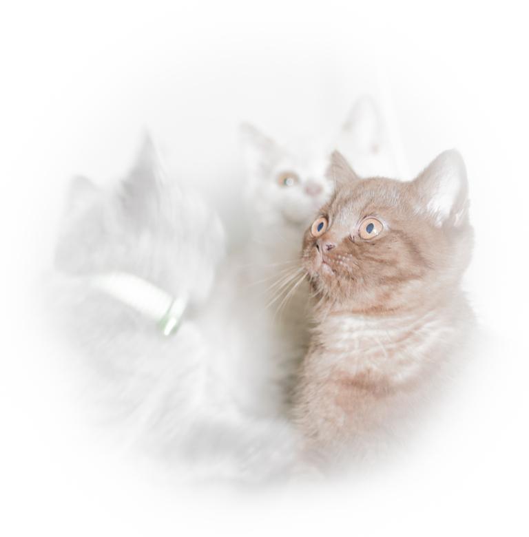 Drie kittens.  - Drie kittens, tja die poseren gewoon niet!