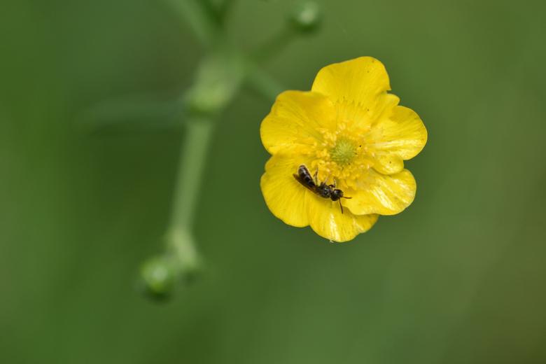 Yellow en Green -