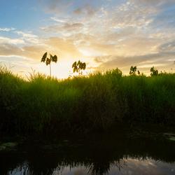 Suriname Sunset