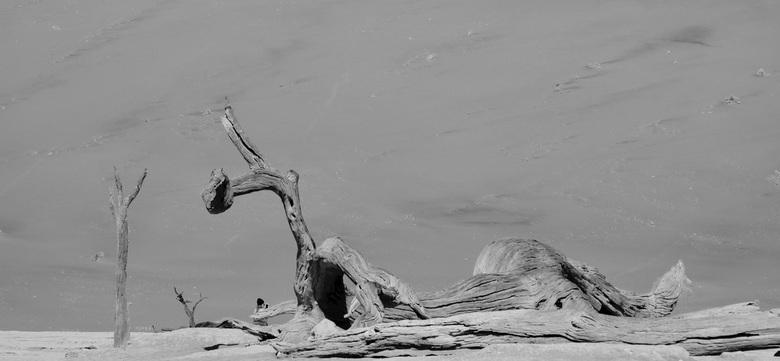 Versteende boom - Namibië, Sossuvlei. <br /> De hitte van de woestijn zorgt voor uitgedroogde versteende bomen. Voor kinderen aantrekkelijk om in te