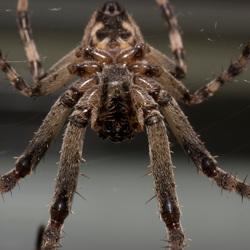spider upsidedown