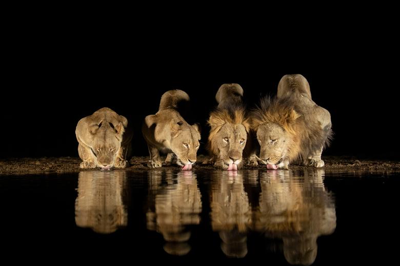 grote dorst - Deze foto is gemaakt in een natuurreservaat in Zuid Afrika. <br />