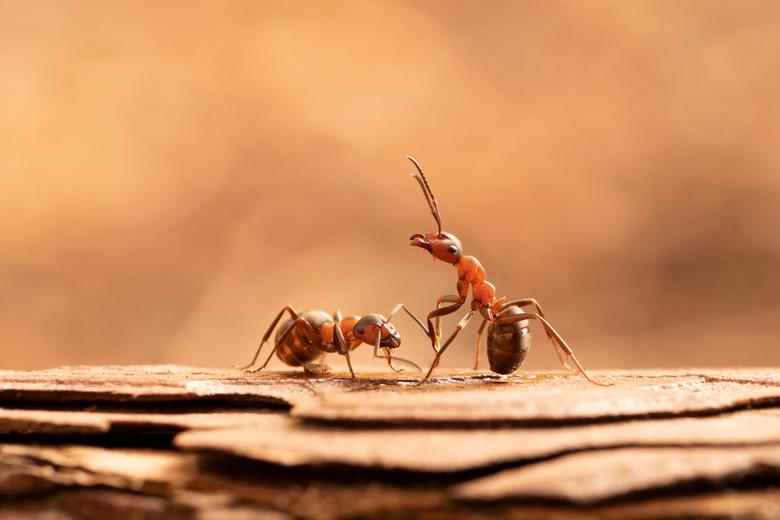 What's up - Als ik in mijn geliefde bos ben dan wil ik meestal wel even langs de mieren.<br /> Op een gegeven moment herkennen ze je denk ik. Deze ke