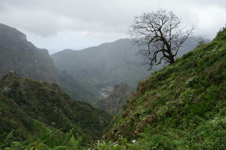Landschap met boom en dorp - Gemaakt tijdens een wandelenvakantie in Madeira