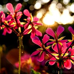Fleur en kleur
