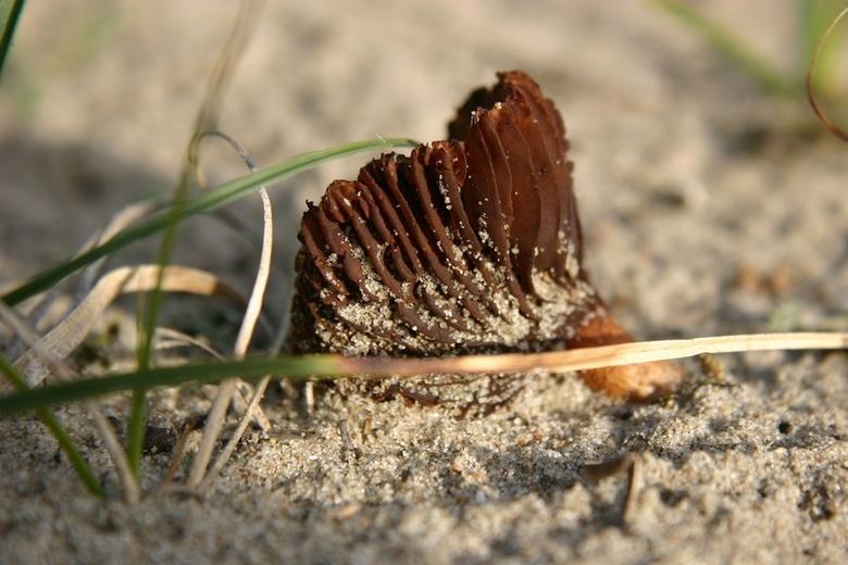 Paddestoel - Dagje uit in de duinen levert deze mooie prent op.