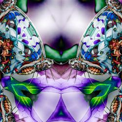Vlinder fantasie