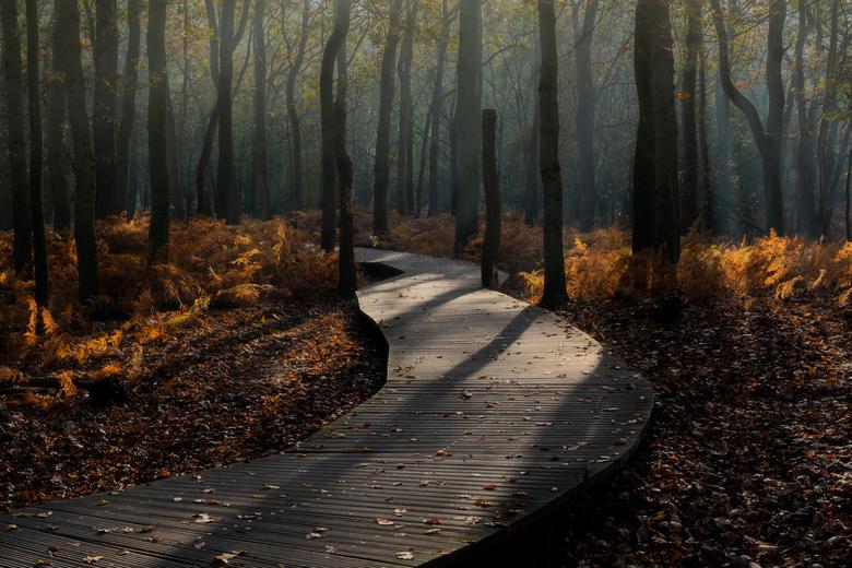 Forest boardwalk - Als dit niet uitnodigt voor een wandelingetje ...