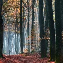 Het grote bos