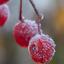 Frozen balls