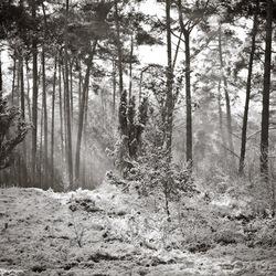 Winterlandschap Luttezand