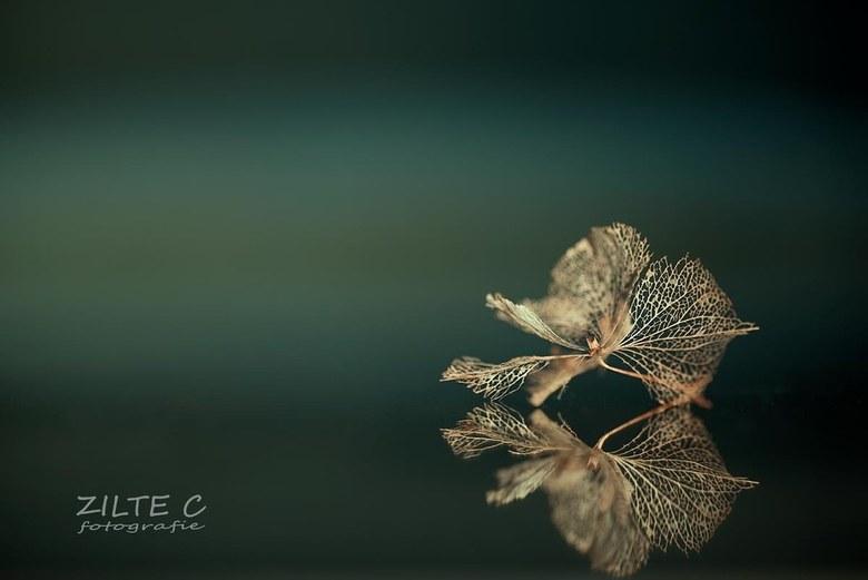 Hortensia bloemetjes -