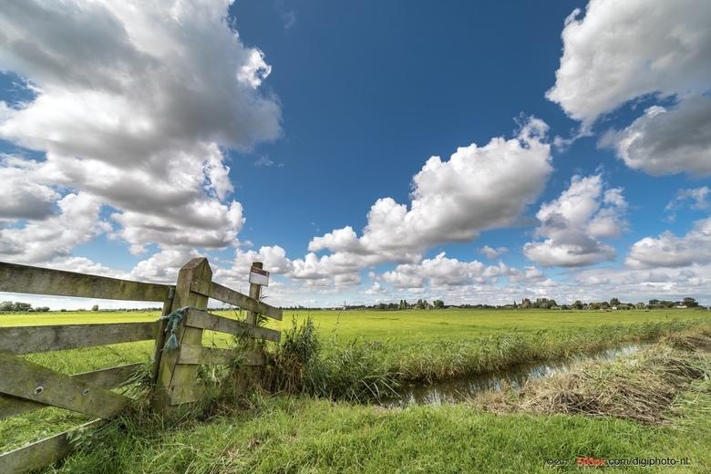 Op een winderige zomerdag in de polder