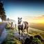 Paard tijdens een mistige zonsopgang