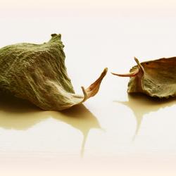 Slakkenblad