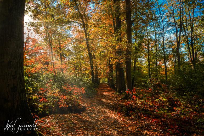 Zon en herfst - Door het prachtige weer, mooie kleuring van de bossen en pradchtig invallend zonlicht.
