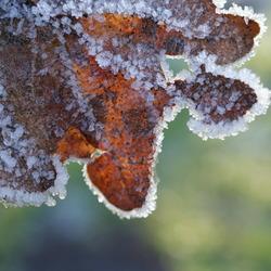 herfstblad in de winter