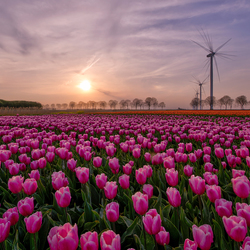 Lente in Flevoland