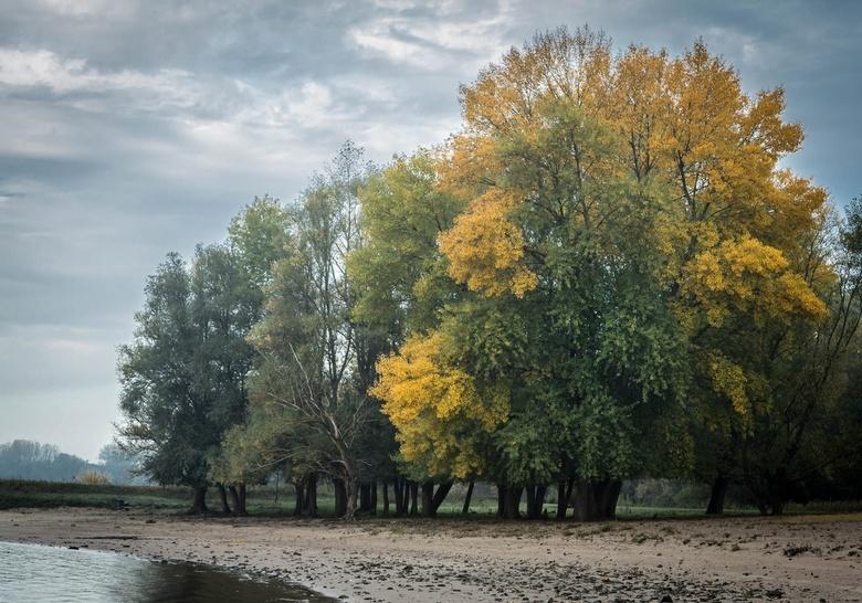 Langs de Waal - In de Klompenwaard stonden op kleine afstand van de Waal deze bomen, een paar Wilgen en Populier