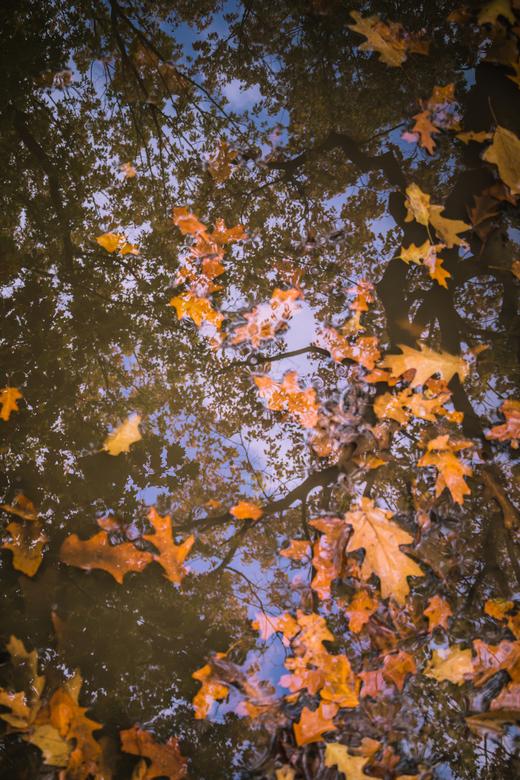 Herfstreflectie - Diepe plassen, afgevallen bladeren en kale bomen...Het is herfst!
