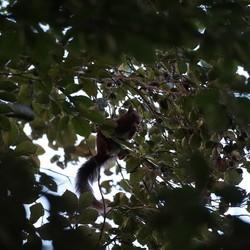 Eekhoorn op eenzame hoogte