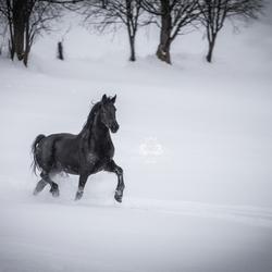 Prachtige fries in de sneeuw