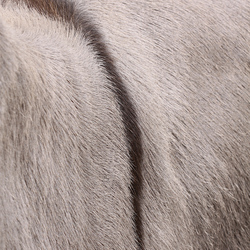Detail van een ezel
