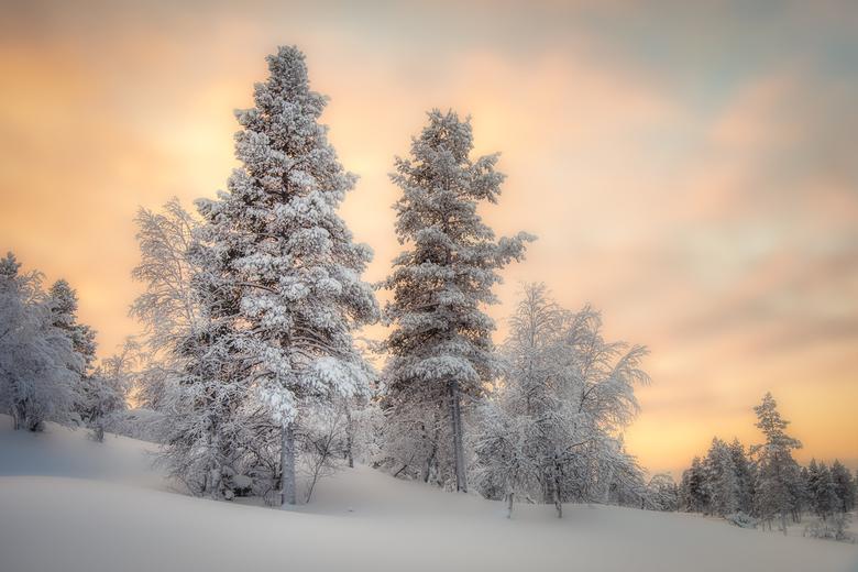 Fins Lapland - Tijdens zonsopkomst om 10.00 uur ........