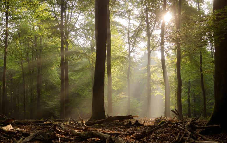 Zon in het Speulderbos - s'Ochtends in het Speulderbos kwam de zon mooi door de bladeren