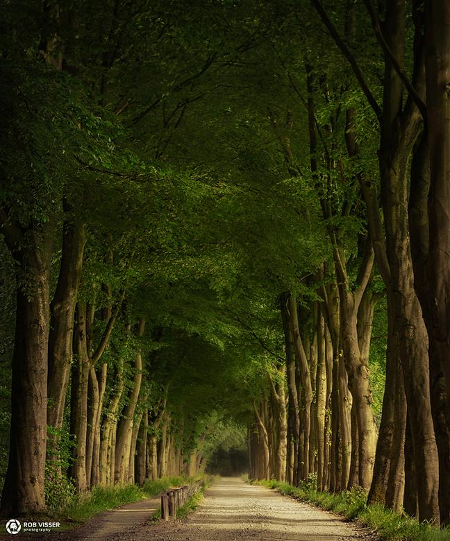 Tunnel of spring - Een weg door het bos op landgoed Gorp en Roovert.