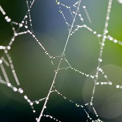 In het web gevangen