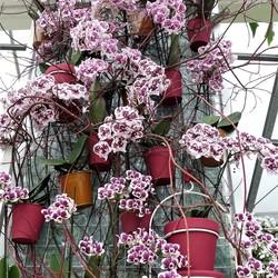 P1480718 keukenhof nr13 Orchidee Paviljoen nr2   23april 2018