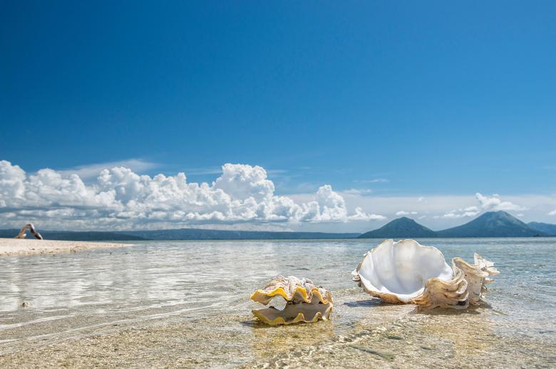 Pidgeon eiland - Grote schelpen op het onbewoonde Pidgeon eiland bij Rabaul in Papua Nieuw Guinea.
